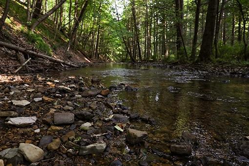 Sweet Root Creek Chesapeake Bay Watershed at River Mountain Retreat