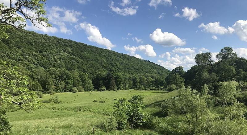 Bluebird Day at Black Valley