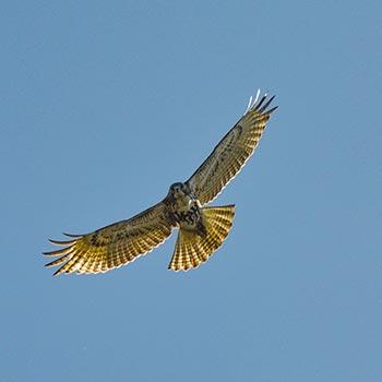 birding spots pennsylvania near pittsburgh dc baltimore