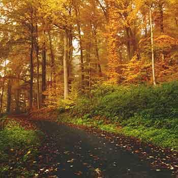 Fall foliage autumn road trips near dc baltimore pittsburgh pennsylvania river mountain