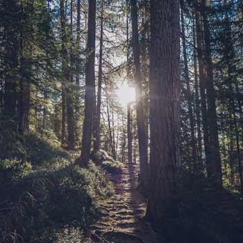 forest bathing mid-atlantic dc baltimore pennsylvania
