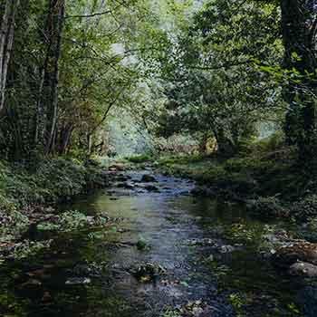 Sweet Root Creek River Mountain