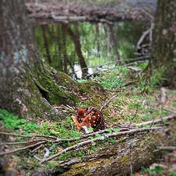 wildlife sightings outdoor vacation trip adventure pennsylvania near DC