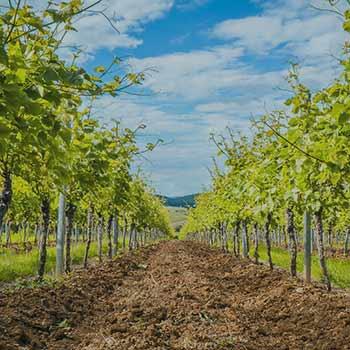 Pennsylvania Wine Tour Weekend Getaway near Washington DC Baltimore Pittsburgh