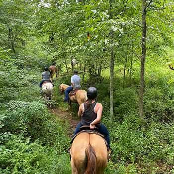 horseplay-web