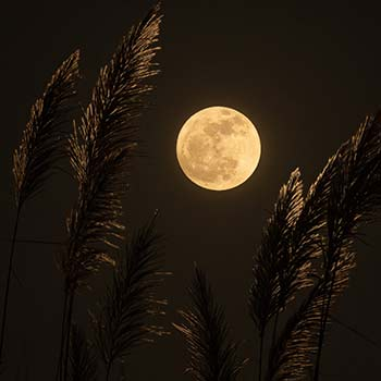 howl-at-the-moon