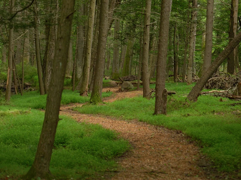 hike-sweet-root-trail-forest