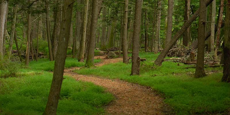 forest bathing at river mountain glamping getaway